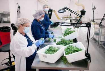 The New Federal Budget Protects Medical Marijuana